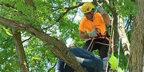 Boise Regional Tree Climbing Competition