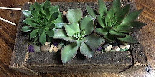 Succulent plant date