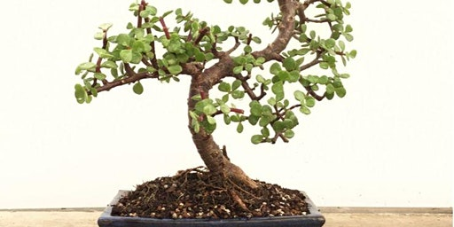 Indoor Bonsai Workshop