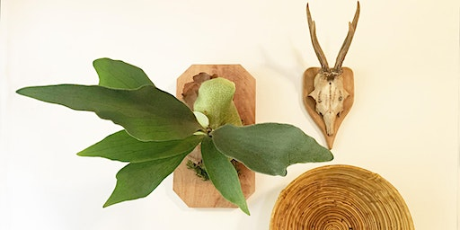 Staghorn Fern Mount
