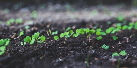 Seed Propagation Course / Cwrs Ymlediad Hadau tickets