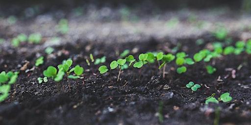 Seed Propagation Course / Cwrs Ymlediad Hadau