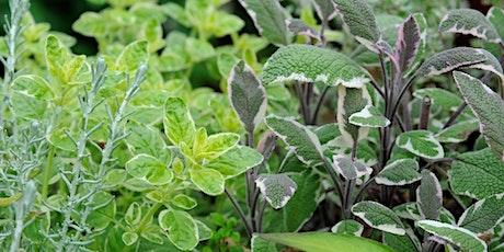 Planting a herb garden tickets