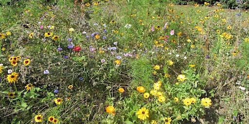 Wildlife Gardening for Bath Home Educators