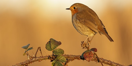 Autumn Nature Photography with Victoria Hillman at RSPB Ham Wall tickets