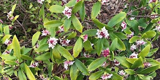 Growing shrubs for wildlife