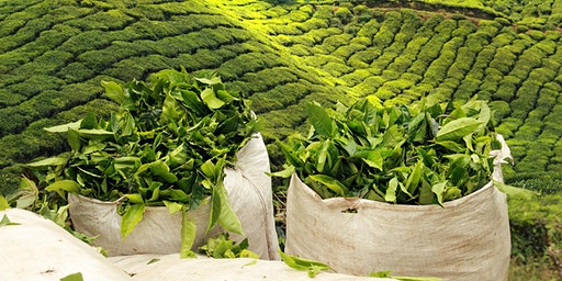 THE WORLD OF TEA