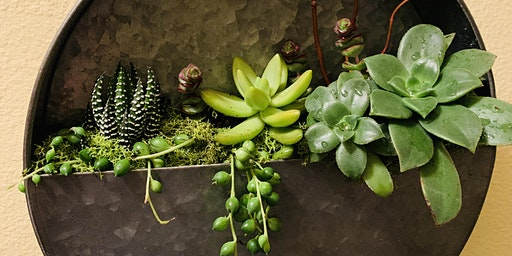 Make it & Take it: Galvanized Wall Pocket Succulent Garden