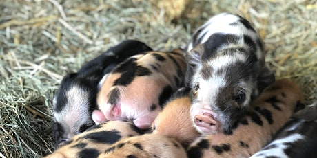 Orion Farms Yoga with Kunekune Piglets tickets