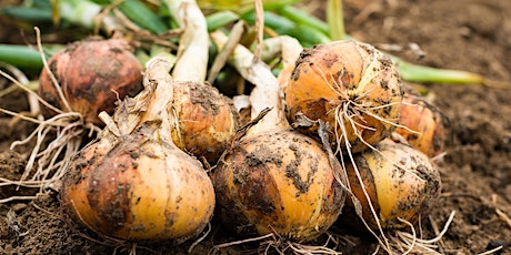 Onions and More - Gardening with the Allium Family tickets