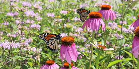 Landscaping for Pollinators - A Fletchers Creek SNAP Event tickets