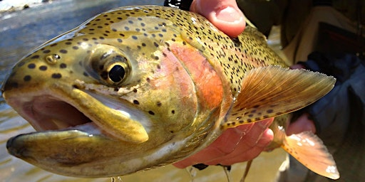 Upper Jackson Private Fishing Excursion