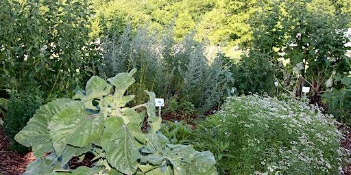 Growing Medicinal Herbs