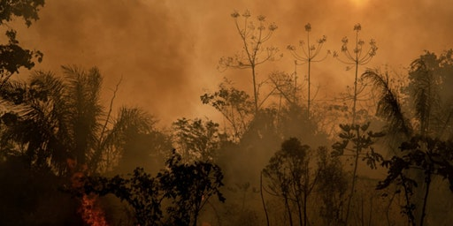 Talks @ Pulitzer: Marcio Pimenta on Activism and Environment in the Amazon