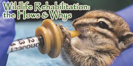 Wildlife Rehabilitation: the Hows & Whys