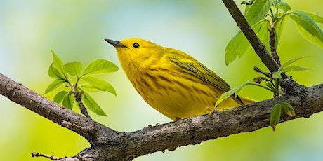 World Migratory Bird Day Workshop tickets