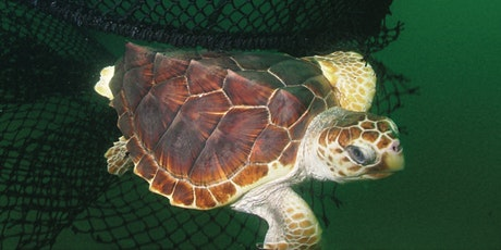 Saving Sea Turtles with Conservation Technology and Dance tickets
