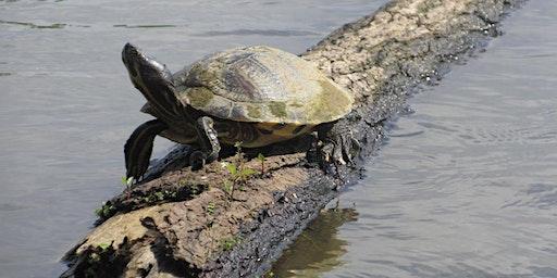 Turtles of North Carolina