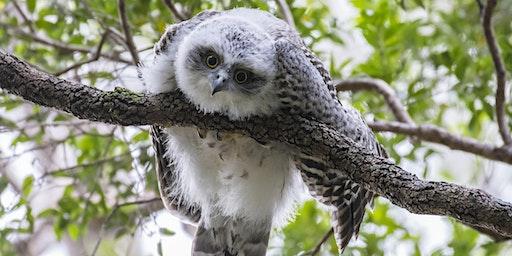 BirdLife Australia; Owl workshop & training