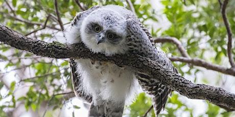 BirdLife Australia; Owl workshop & training tickets