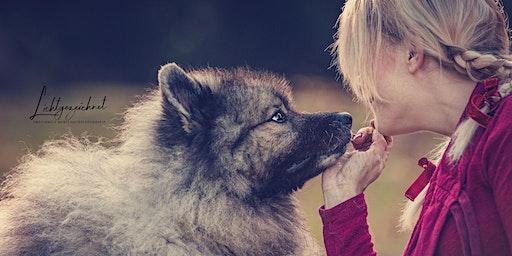 Fotospaziergang mit deinem Hund