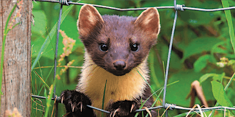 Living with pine martens symposium tickets