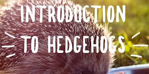 Introduction to Hedgehogs