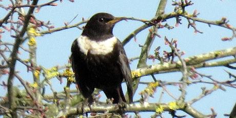 Cleeve Common autumn bird life tour tickets