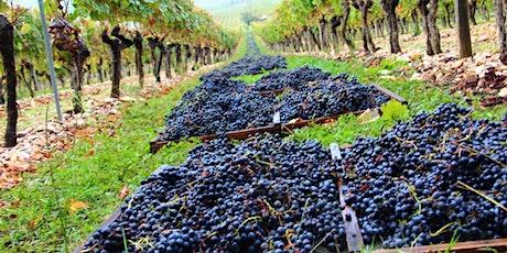 Binology 102: The Basics of French Wine tickets