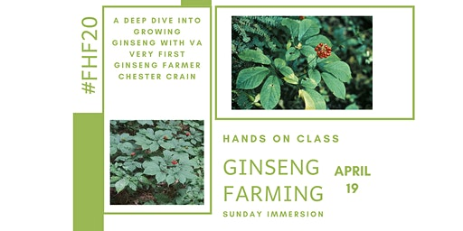 Ginseng Farming and Preservation