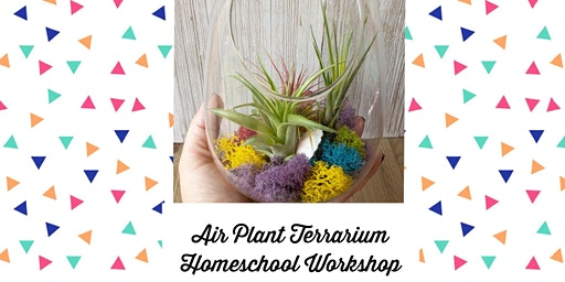 Create an Air Plant Terrarium - Homeschool Workshop