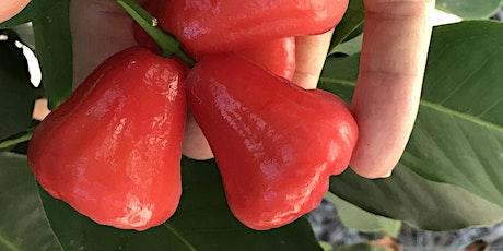 Tour An Urban Organic Tropical Fruit Farm tickets