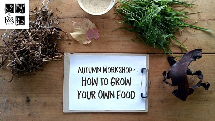 Grow Your Own Food; Saturday Autumn Workshop image