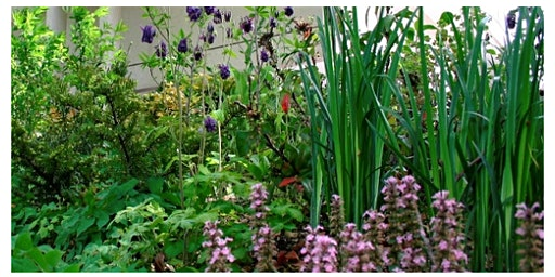 Creating Medicinal Gardens -Thursday March 12