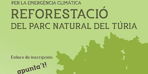 Reforestació del Parc Natural del Túria