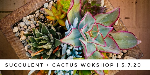 Succulent & Cactus Workshop