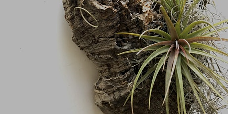 """""""E"""" is for Epiphytes: a Kid's Workshop tickets"""