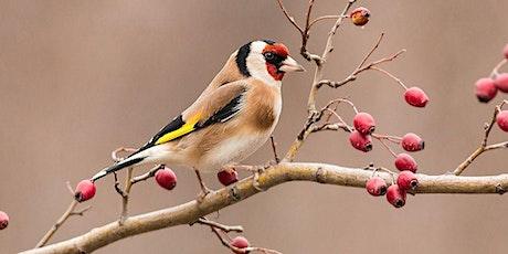 Garden Birds of Ireland. Identify & attract these beautiful garden visitors tickets