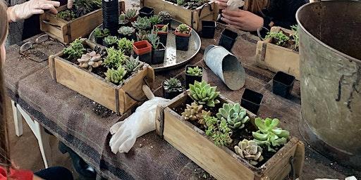 Succulents planting party!