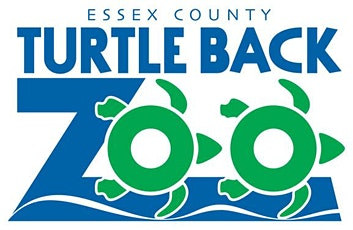 Image result for turle back zoo  clip art