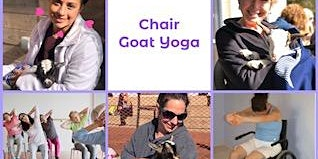 CHAIR Goat Yoga with Baby Goats in Top Hats & Flower Crowns!