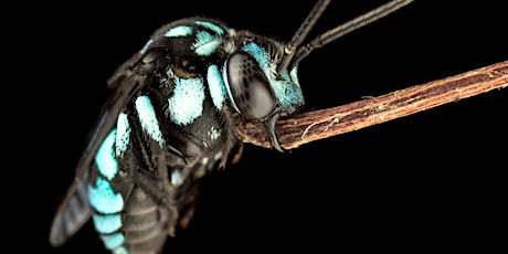 Macro Photography with James Dorey - One or Two Day Masterclass 2020 tickets