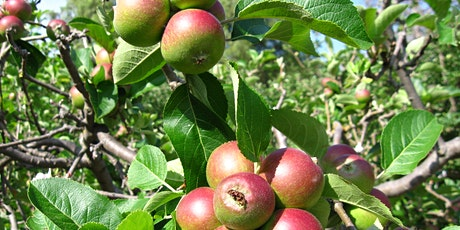 Heritage Apple Tree Sale and Tasting Day tickets