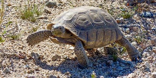 Presentation: Desert Tortoise in the Santa Rosa/San Jacinto Mountains National Monument