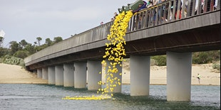 Return of the Great Barwon Heads Duck race