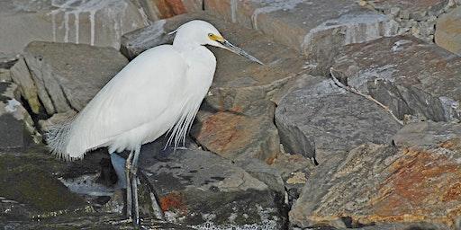 Bird Watching Excursions - Goolwa
