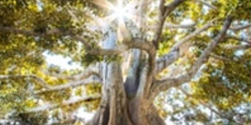 Tree of Life Paint Night