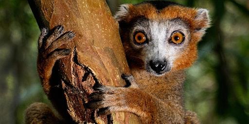Madagascar by Guido Bonett