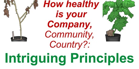 Copy of How Healthy Is Your Company?: Intriguing Principles  from Nature tickets