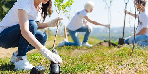 Boode Farm Tree Planting, Braunton
